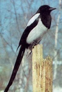 Фото вы увидете в галереях: птицы пермского края